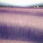 Das_Lavendelfeld_mit_Dach_2012_Maerz_-_Acryl_auf_Leinwand_-_100_x_150cm_--_eMail